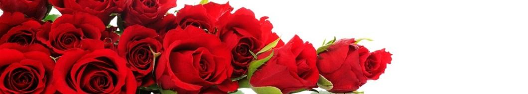 La signification des roses